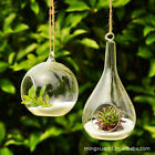 Wall Hang Glass Flower Plant Vase Terrarium Container Home Garden Ball Decor LC