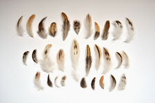 20 Natural Black Brown Cream White Feathers Bird Small Mixed Spotted Tan 3-10cm