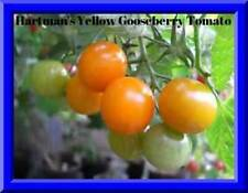 HARTMAN'S YELLOW GOOSEBERRY TOMATO!  20 SEEDS! ABSOLUTLY DELIOIOUS! COMBINED S/H