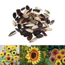 25Pcs Graines De Tournesol Sunflower Samen Seeds Helianthus Multi-couleur Fleur
