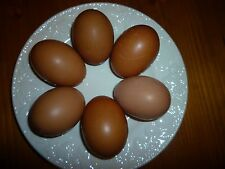 12 Silver Blue Laced Barnevelder Hatching Eggs