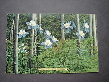 Old Postcard of Colorado Columbines and Aspens