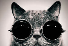 Framed Print - Black and White Funky Cat Wearing Sunglasses (Picture Animal Art)