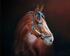 Rare American Pharoah Portrait Canvas Print Thoroughbred Horse Collectible Art