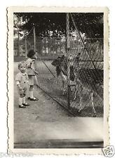 Petite fille et petit garçon zoo animaux - photo ancienne snapshot an.1930