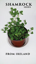 Shamrock 400 Seeds Approx. Free Complimentary Irish Blessing Bookmark with Order