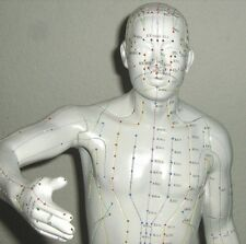 20inch Human acupuncture model anatomy anatomical sculpture stature