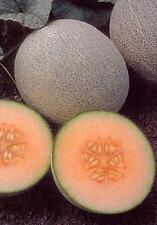 Cantaloupe Ambrosia Vegetable Seeds