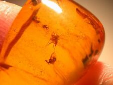 RARE Swarm of 7 Flies with Ancient Pollen in Authentic Dominican Amber Gemstone