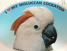 ON SALE! Moluccan Cockatoo Parrot Exotic Bird Vinyl Decal Bumper Sticker