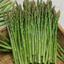 100 Mary Asparagus Seeds Easy to Grow in Your Home Garden Rich in nutrients