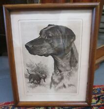 FINE BLACK LABRADOR ETCHING SIGNED R. H. PALENSKE FRAMED UNDER GLASS HYDE PARK