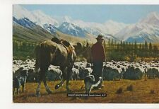 Sheep Mustering South Island New Zealand Postcard 471a