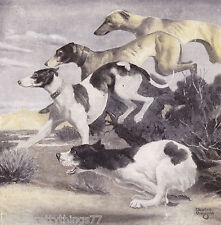 GREYHOUND Hunting Dog on the Scent of Prey Vintage 1942 MATTED Picture