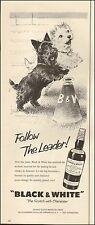 1960s vintage AD Black & White Scotch Whiskey Fleischmann Cute Scotties 121916