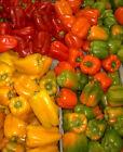 """Rote Paprika Sorte: Pimento 8 exotische Samen """"ALLES NUR 1 EURO"""""""