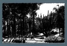 MONACO - Cartolina - 1960-1965 - Il giardino del Casinò-Casino Garden- 20 c