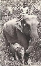 CP COMITE NATIONAL DE L´ ENFANCE ELEPHANTE DES INDES ET SON PETIT