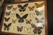 RARE WWII ERA GUADALCANAL BUTTERFLY COLLECTION MOUNTED & FRAMED