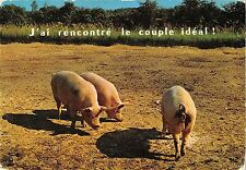 BT9258 j ai rencontre le couple ideal pig couchon france  animal animaux