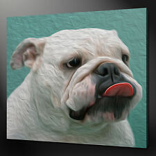"FUNKY BULLDOG ANIMAL PICTURE BOX CANVAS PRINT 12""x12"""" FREE UK POSTAGE"