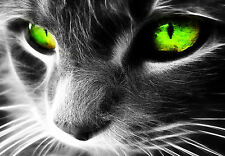 Framed Abstract Print - Black & White Cat with Green Eyes (Picture Poster Art)