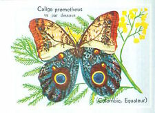 CARD 60s PAPILLON INSECTE BUTTERFLY CALIGO PROMETHEUS LEPIDOPTERE Nymphalidae