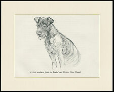 LAKELAND TERRIER SEATED LOVELY 1930'S DOG SKETCH PRINT by KF BARKER MOUNTED