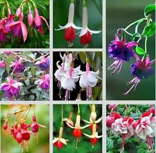 Fuchsias Seeds, Potted Flowers, Bell Flower, Lantern Begonia