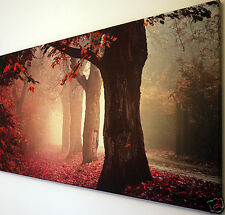 "AUTUMN TREES RED LEAVES SCENE  CANVAS WALL ART PICTURE LARGE 18"" X 32"""