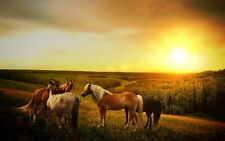 """perfact oil painting handpainted on canvas """"horses under the setting sun """" NO440"""