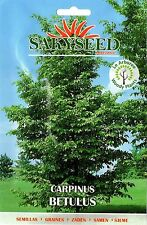 10 Semi/Seeds CARPINUS BETULUS