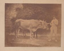PHOTO papier salé 1855 - Ecole de PAU - Paire de boeufs vacher - 120615