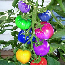 200Pcs Rainbow Tomato Ornamental Potted Organic Vegetable Seeds Bonsai Plant HOT