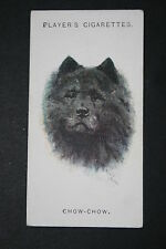 CHOW CHOW  Chinese Edible Dog   Vintage Portrait Card # VGC