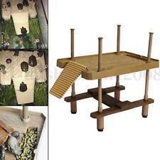 Terrasse Plate-forme Ïlot Flottant Rampe Échelle Pour Tortue Grenouille Reptiles