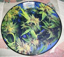 """RARE Sicwax Limited Edition Chronic Picture Disc 12"""" Vinyl Control Record"""