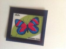BLUE CAP CHEESE FLIXIES ( TRANPANCEY )BUTTERFLY SERIES CATAGRAMMA PITHEAS