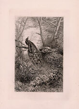 "Incredible ORIGINAL 1800s Karl Bodmer Etching ""Peacocks in Nature"" SIGNED COA"