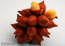 10 Fresh tropical exotic Salacca tree/plant/fruit seeds from Asia
