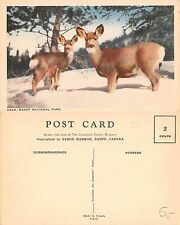 Canada - Banff National Park - WITH DEER (M-L 021)