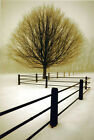 David Lorenz Winston•Solitude•36x52 Photo POSTER•Oversized•NEW