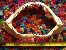 REEF SHARK JAW (22 x 13 cm) Jaws Teeth TAXIDERMY B
