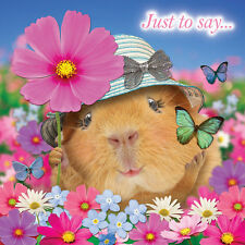 Guinea Pig Crazy Crew Blank Greeting Card Butterflies Animal Lovers