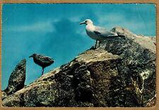 Cpsm / Cpm Bretagne goëland argenté et son petit wn0454