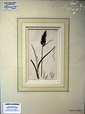 James Sowerby Botanical print mounted ready to frame Carex Intermedia c1837