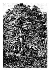 "Clear stamp (2.5""x3.5"") Engraved Forest FLONZ vintage acrylic rubber stamps"