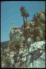 214034 Cactus Garden Eze Provence France A4 Photo Print