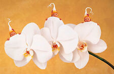"Anne Geddes -MOTH ORCHID - 8 month old triplets - beautiful - 11"" x 14"""