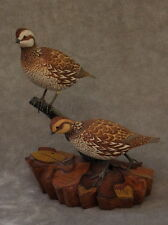 Original BOBWHITE QUAIL pair  Wood Carving